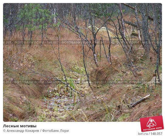 Лесные мотивы, фото № 148057, снято 3 ноября 2007 г. (c) Александр Кокарев / Фотобанк Лори