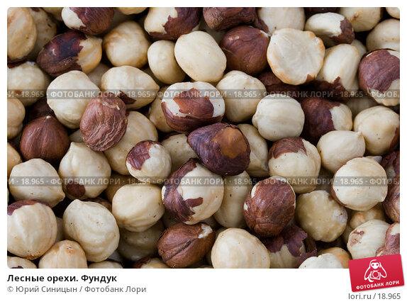 Лесные орехи. Фундук, фото № 18965, снято 22 февраля 2007 г. (c) Юрий Синицын / Фотобанк Лори