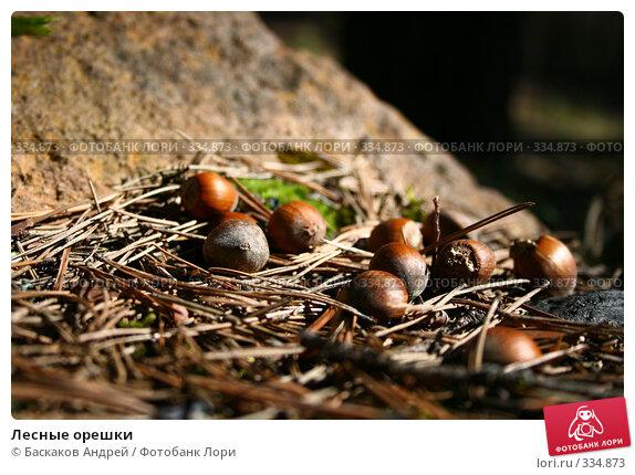 Лесные орешки, фото № 334873, снято 23 апреля 2008 г. (c) Баскаков Андрей / Фотобанк Лори