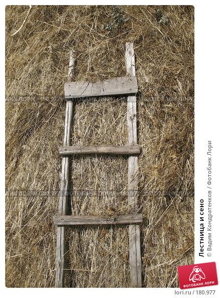 Лестница и сено, фото № 180977, снято 29 октября 2016 г. (c) Вадим Кондратенков / Фотобанк Лори