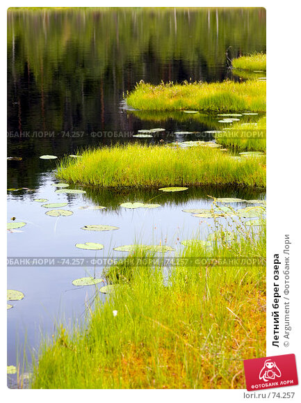 Купить «Летний берег озера», фото № 74257, снято 5 июля 2007 г. (c) Argument / Фотобанк Лори