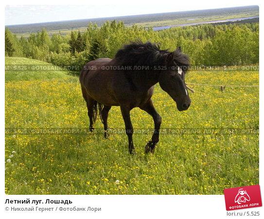 Купить «Летний луг. Лошадь», фото № 5525, снято 18 июня 2005 г. (c) Николай Гернет / Фотобанк Лори