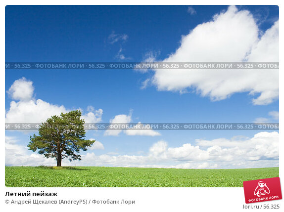Летний пейзаж, фото № 56325, снято 24 июня 2007 г. (c) Андрей Щекалев (AndreyPS) / Фотобанк Лори