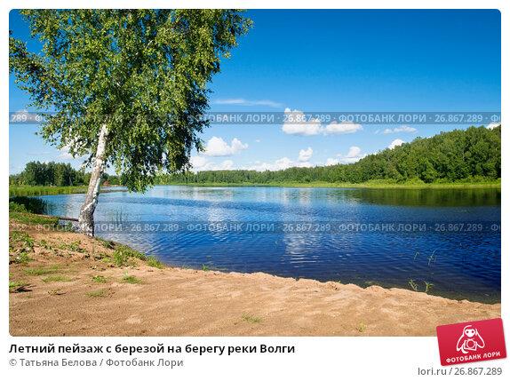 Летний пейзаж с березой на берегу реки Волги, фото № 26867289, снято 11 июля 2017 г. (c) Татьяна Белова / Фотобанк Лори
