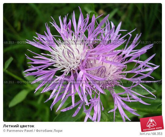 Летний цветок, фото № 68353, снято 16 июля 2006 г. (c) Parmenov Pavel / Фотобанк Лори