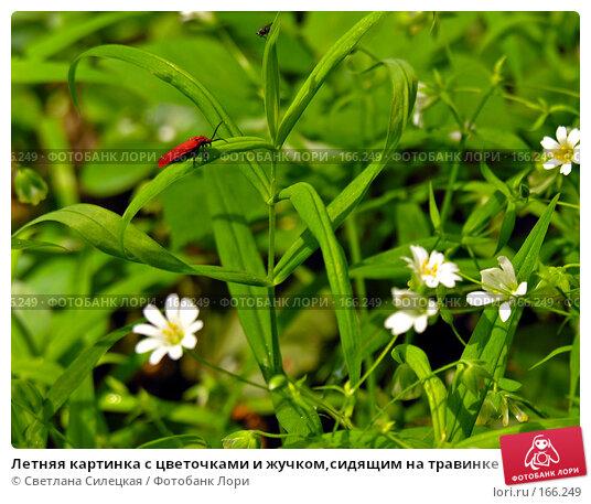 Купить «Летняя картинка с цветочками и жучком,сидящим на травинке», фото № 166249, снято 24 мая 2007 г. (c) Светлана Силецкая / Фотобанк Лори