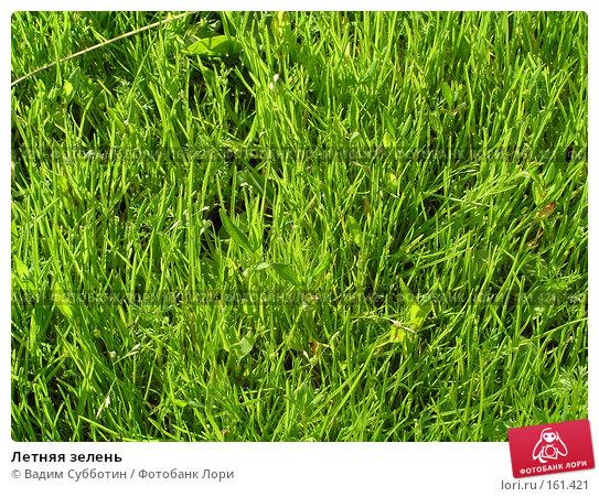 Летняя зелень, фото № 161421, снято 28 июля 2017 г. (c) Вадим Субботин / Фотобанк Лори