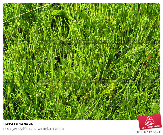 Летняя зелень, фото № 161421, снято 26 мая 2017 г. (c) Вадим Субботин / Фотобанк Лори