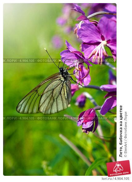 Купить «Лето, бабочка на цветке», фото № 4904105, снято 27 июня 2013 г. (c) ElenArt / Фотобанк Лори