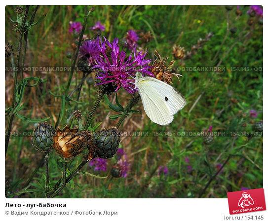 Лето - луг-бабочка, фото № 154145, снято 10 декабря 2016 г. (c) Вадим Кондратенков / Фотобанк Лори