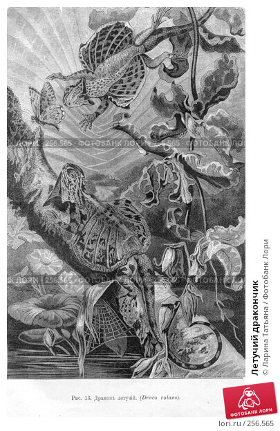 Купить «Летучий дракончик», фото № 256565, снято 23 апреля 2018 г. (c) Ларина Татьяна / Фотобанк Лори