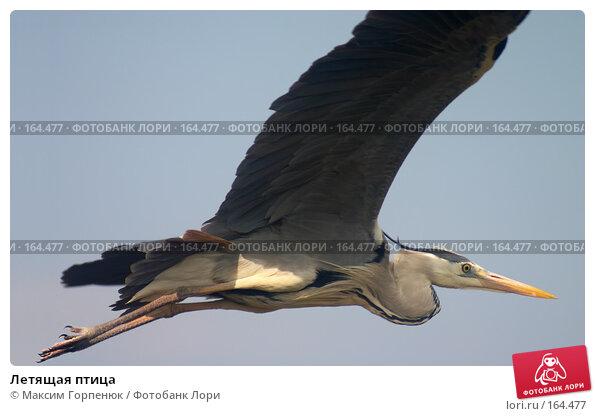 Летящая птица, фото № 164477, снято 27 апреля 2006 г. (c) Максим Горпенюк / Фотобанк Лори