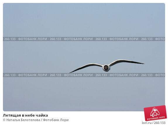 Летящая в небе чайка, фото № 260133, снято 29 марта 2008 г. (c) Наталья Белотелова / Фотобанк Лори