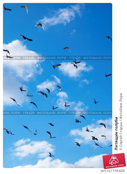 Летящие голуби, фото № 119629, снято 26 декабря 2006 г. (c) Сергей Старуш / Фотобанк Лори