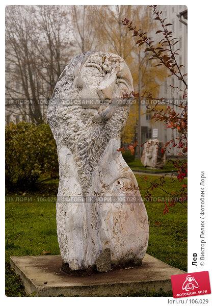 Купить «Лев», фото № 106029, снято 28 октября 2007 г. (c) Виктор Пелих / Фотобанк Лори