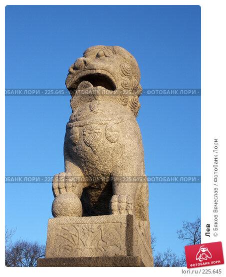 Купить «Лев», фото № 225645, снято 26 февраля 2008 г. (c) Бяков Вячеслав / Фотобанк Лори
