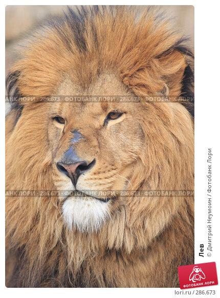 Купить «Лев», эксклюзивное фото № 286673, снято 26 апреля 2008 г. (c) Дмитрий Неумоин / Фотобанк Лори