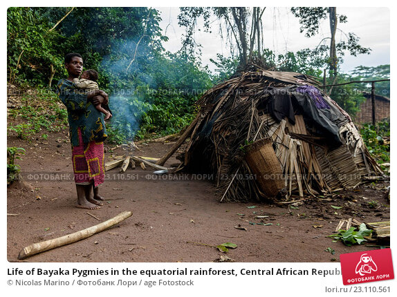 Купить «Life of Bayaka Pygmies in the equatorial rainforest, Central African Republic, Africa», фото № 23110561, снято 13 октября 2015 г. (c) age Fotostock / Фотобанк Лори