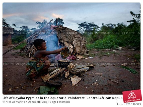 Купить «Life of Bayaka Pygmies in the equatorial rainforest, Central African Republic, Africa», фото № 23110593, снято 13 октября 2015 г. (c) age Fotostock / Фотобанк Лори