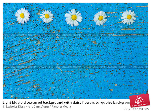Купить «Light blue old textured background with daisy flowers turquoise background top view», фото № 27791305, снято 20 октября 2018 г. (c) PantherMedia / Фотобанк Лори