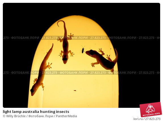 Купить «light lamp australia hunting insects», фото № 27823273, снято 22 февраля 2018 г. (c) PantherMedia / Фотобанк Лори