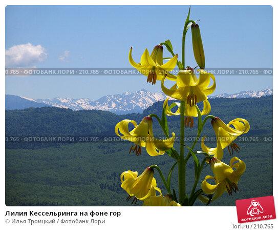 Лилия Кессельринга на фоне гор, фото № 210765, снято 8 июня 2005 г. (c) Илья Троицкий / Фотобанк Лори