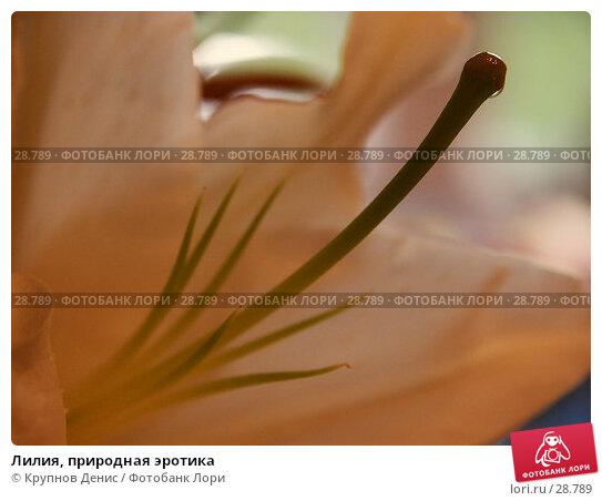 Лилия, природная эротика, фото № 28789, снято 12 июля 2005 г. (c) Крупнов Денис / Фотобанк Лори