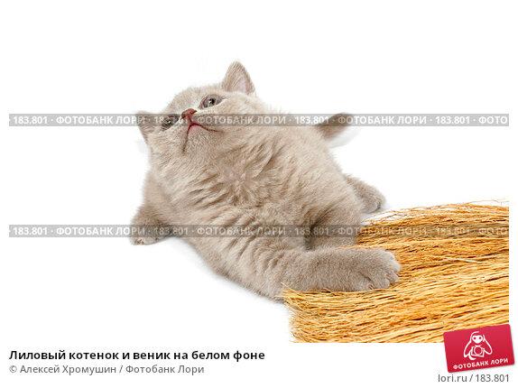 Купить «Лиловый котенок и веник на белом фоне», фото № 183801, снято 27 октября 2007 г. (c) Алексей Хромушин / Фотобанк Лори