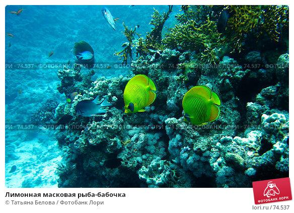 Лимонная масковая рыба-бабочка, фото № 74537, снято 12 января 2006 г. (c) Татьяна Белова / Фотобанк Лори
