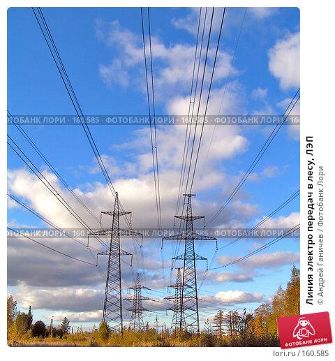 Купить «Линия электро передач в лесу, ЛЭП», фото № 160585, снято 1 октября 2004 г. (c) Андрей Ганичев / Фотобанк Лори