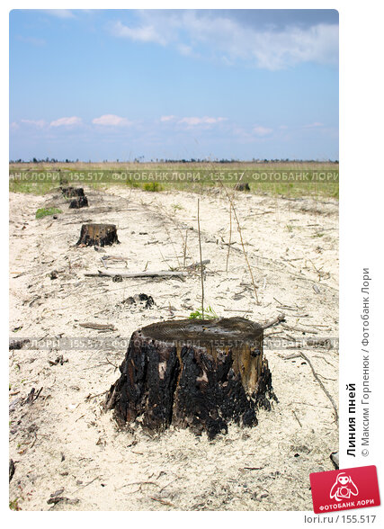 Линия пней, фото № 155517, снято 28 апреля 2006 г. (c) Максим Горпенюк / Фотобанк Лори