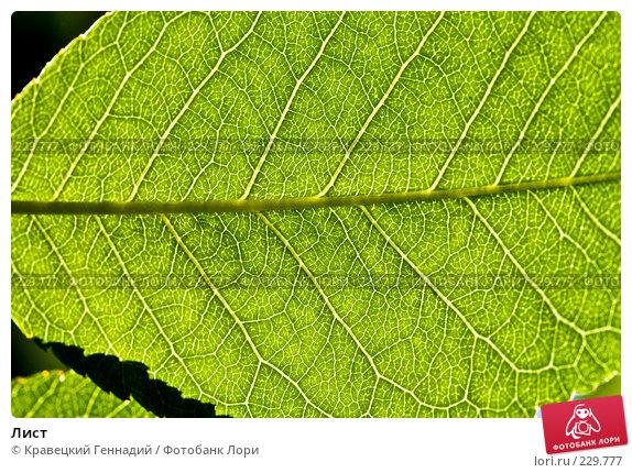 Лист, фото № 229777, снято 21 июня 2004 г. (c) Кравецкий Геннадий / Фотобанк Лори