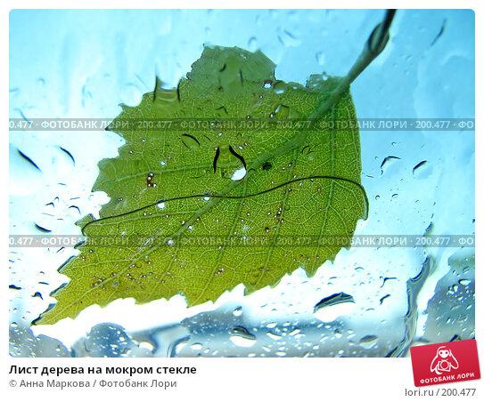 Лист дерева на мокром стекле, фото № 200477, снято 9 сентября 2007 г. (c) Анна Маркова / Фотобанк Лори