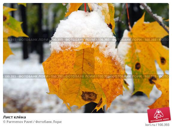 Лист клёна, фото № 100393, снято 16 октября 2007 г. (c) Parmenov Pavel / Фотобанк Лори