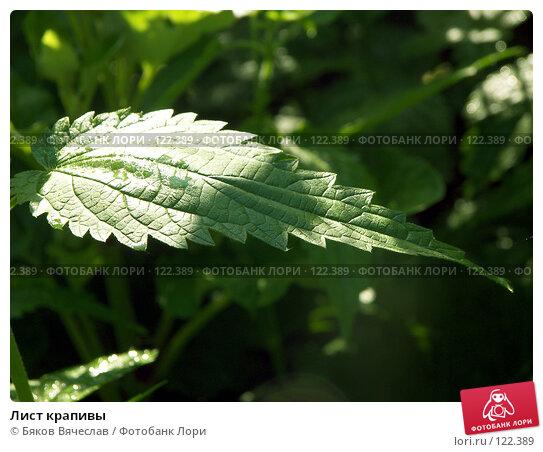Лист крапивы, фото № 122389, снято 30 июня 2007 г. (c) Бяков Вячеслав / Фотобанк Лори