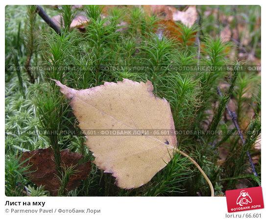 Лист на мху, фото № 66601, снято 11 сентября 2005 г. (c) Parmenov Pavel / Фотобанк Лори