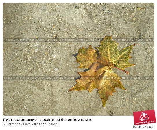 Купить «Лист, оставшийся с осени на бетонной плите», фото № 44033, снято 14 ноября 2006 г. (c) Parmenov Pavel / Фотобанк Лори