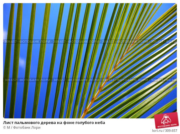 Купить «Лист пальмового дерева на фоне голубого неба», фото № 309657, снято 25 апреля 2018 г. (c) М / Фотобанк Лори