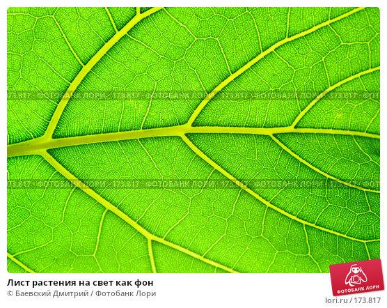 Лист растения на свет как фон, фото № 173817, снято 12 января 2008 г. (c) Баевский Дмитрий / Фотобанк Лори