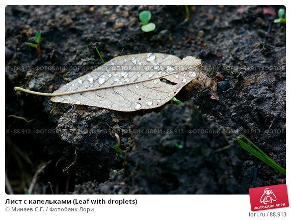 Лист с капельками (Leaf with droplets), фото № 88913, снято 22 сентября 2007 г. (c) Минаев С.Г. / Фотобанк Лори