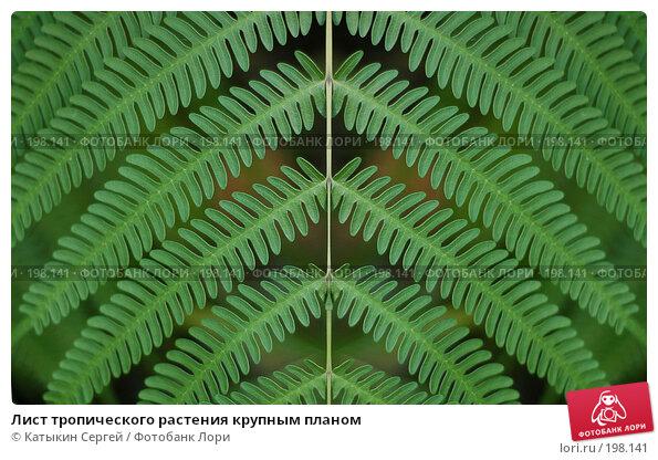 Лист тропического растения крупным планом, фото № 198141, снято 23 марта 2017 г. (c) Катыкин Сергей / Фотобанк Лори