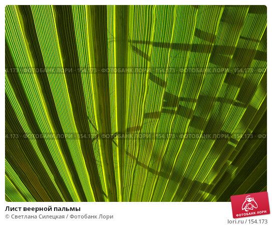 Купить «Лист веерной пальмы», фото № 154173, снято 8 августа 2007 г. (c) Светлана Силецкая / Фотобанк Лори
