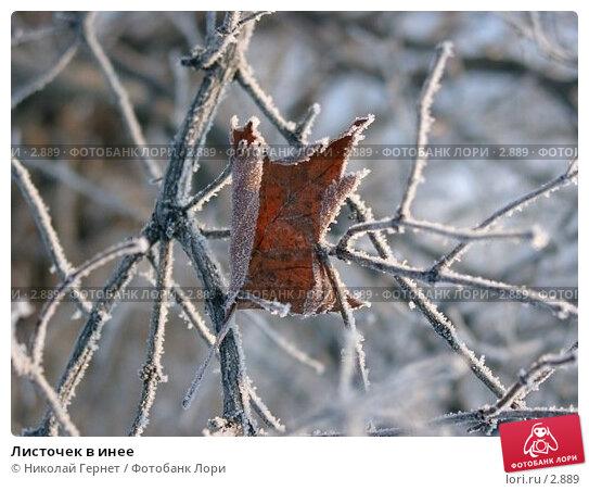 Листочек в инее, фото № 2889, снято 14 декабря 2003 г. (c) Николай Гернет / Фотобанк Лори