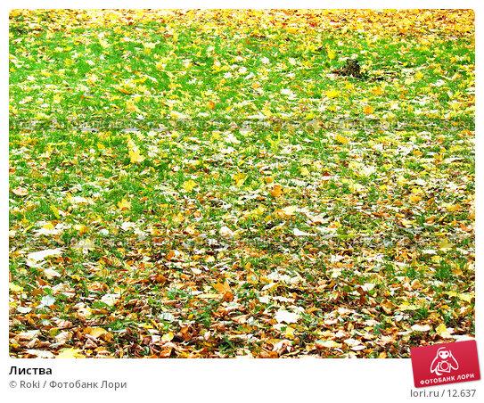 Листва, фото № 12637, снято 18 октября 2006 г. (c) Roki / Фотобанк Лори