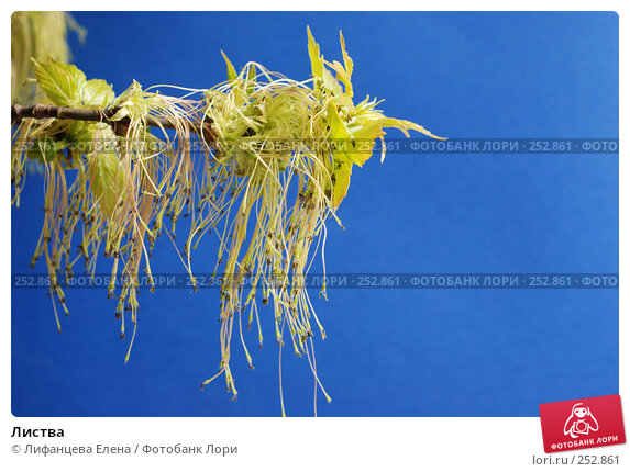 Листва, фото № 252861, снято 14 апреля 2008 г. (c) Лифанцева Елена / Фотобанк Лори