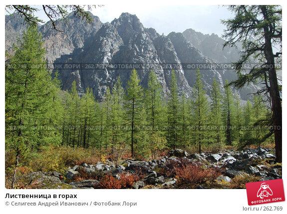 Лиственница в горах, фото № 262769, снято 26 августа 2007 г. (c) Селигеев Андрей Иванович / Фотобанк Лори