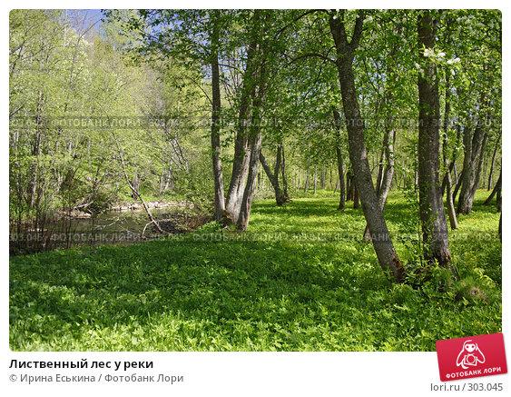 Лиственный лес у реки, фото № 303045, снято 25 мая 2008 г. (c) Ирина Еськина / Фотобанк Лори