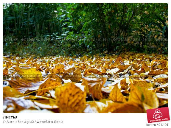 Купить «Листья», фото № 91101, снято 30 сентября 2007 г. (c) Антон Белицкий / Фотобанк Лори