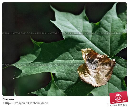 Купить «Листья», фото № 107769, снято 24 августа 2003 г. (c) Юрий Назаров / Фотобанк Лори