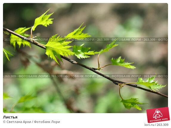 Листья, фото № 263309, снято 26 апреля 2008 г. (c) Светлана Архи / Фотобанк Лори